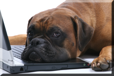 dog napping on computer